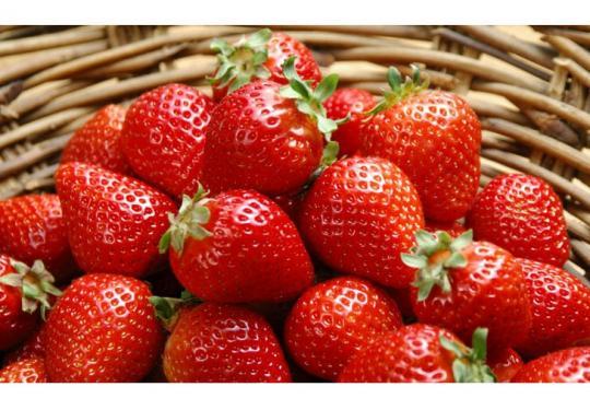 北京草莓采摘首选丁丁草莓园,昌平草莓采摘推荐