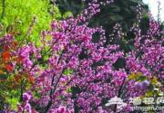 未来3个月河北最美赏花处