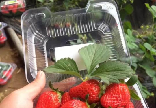 这大概是昌平最全草莓采摘地图 你肯定用得上