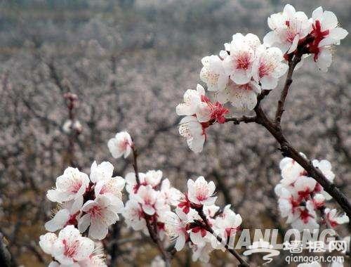 春暖花开了 2017年北京最全赏花攻略地图[墙根网]