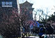 2017北京明城墙梅花文化节开幕