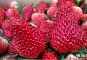 这大概是昌平最全草莓采摘地图 本周末你肯定用得上