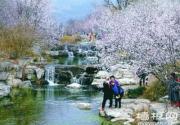 """北京植物园提前10天变""""桃花源"""""""