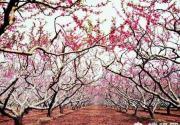 深州市第三届桃花节4月8日开幕 万亩仙桃成深州最美春色