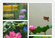 赏荷季将至 北京赏荷花的地方有哪些?