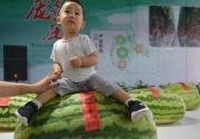 """2017大兴西瓜节将于28日开幕 81岁老瓜农种出150斤""""瓜王"""""""