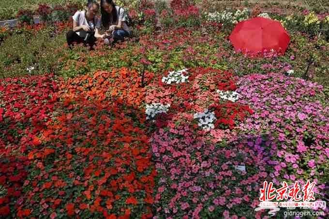 北京世园会将建林荫游览系统 6米宽林荫大道串起34个分展园[墙根网]