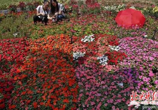 北京世园会将建林荫游览系统 6米宽林荫大道串起34个分展园