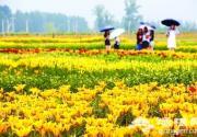 2017第三届北京百合文化节明天开幕 世葡园百合花海迎客