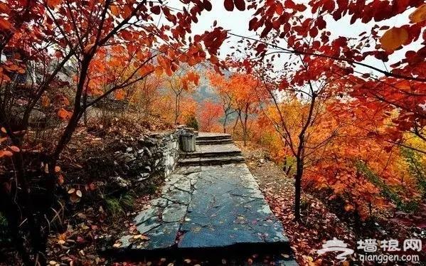 秋高气爽登山去,京郊十条登山步道推荐[墙根网]