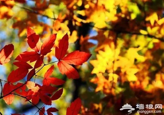 秋日的北京哪里最美?这么近却这么美得地方太少人知道了[墙根网]