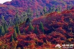 京郊红叶观赏地推荐:30个赏红叶好去处