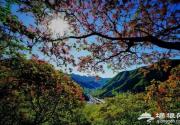 去房山坡峰岭赏红叶可以入住这些民宿