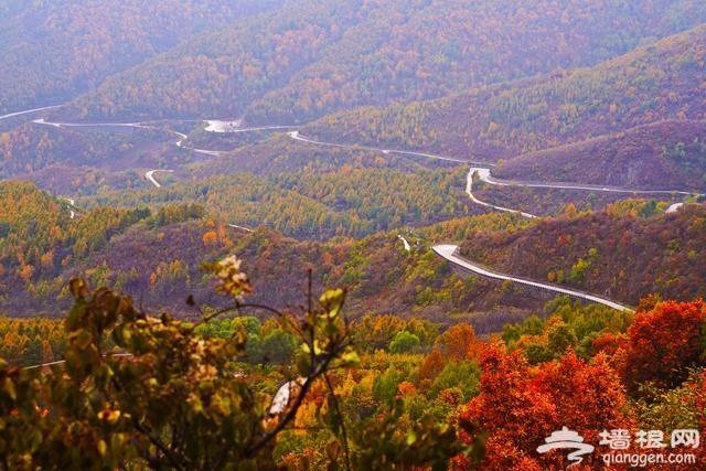 北京最不挤的一个百花山红叶观赏路线,1天刷完,绝不堵车[墙根网]