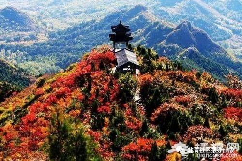 枫叶红了:北京赏红叶,除了香山还有这些观赏地[墙根网]