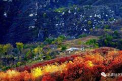 枫叶红了:北京赏红叶,除了香山还有这些观赏地