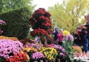 北京菊花展亮相北海公园 布展区有多品种达万盆