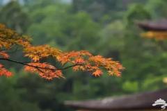 红动京城,北京最美赏叶景区攻略!