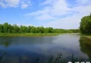 北京市唯一现存的大型芦苇沼泽湿地