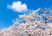北京最美的春天在哪里?北京春天赏花推荐