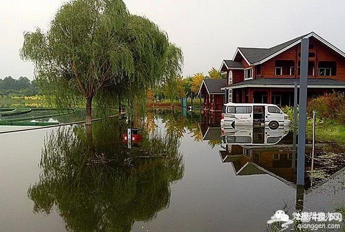 """北京昌平新城滨河森林公园成""""冰河世界"""" 苦了树木和建筑[墙根网]"""