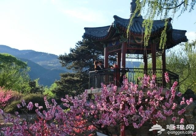 北京这10个最佳赏花地,你去过吗?[墙根网]