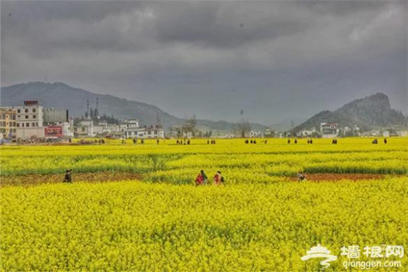 云南·罗平第七届国际花海自行车节3月3日举行[墙根网]