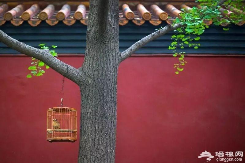 北京春游去哪里?踏青爬山烧烤赏花好去处[墙根网]