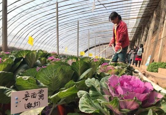世园会194种蔬菜植物4月待展 展览将持续到10月
