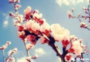 平谷桃花节,迎八方游客,赏醉美桃花