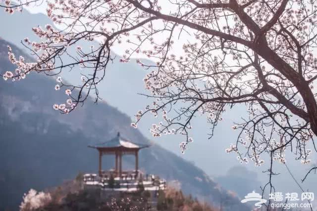 京郊10个春游好去处!带娃爬山、踏春、赏花、拍照[墙根网]