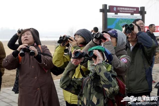 """北京延庆野鸭湖变身""""天鹅湖"""" 要想看得趁早儿来![墙根网]"""