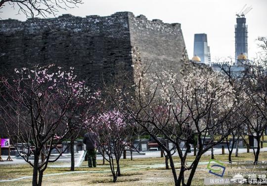 北京明城墙遗址公园梅花文化节游玩指南