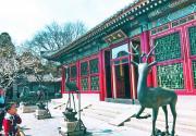"""玉兰因何被称""""望春花""""?北京这三处景点的玉兰最有名"""