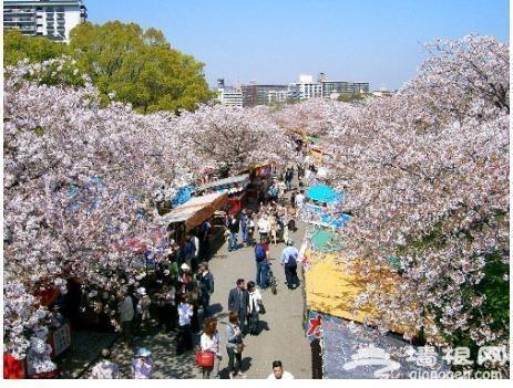 北京最大樱花园下周举办首届樱花节