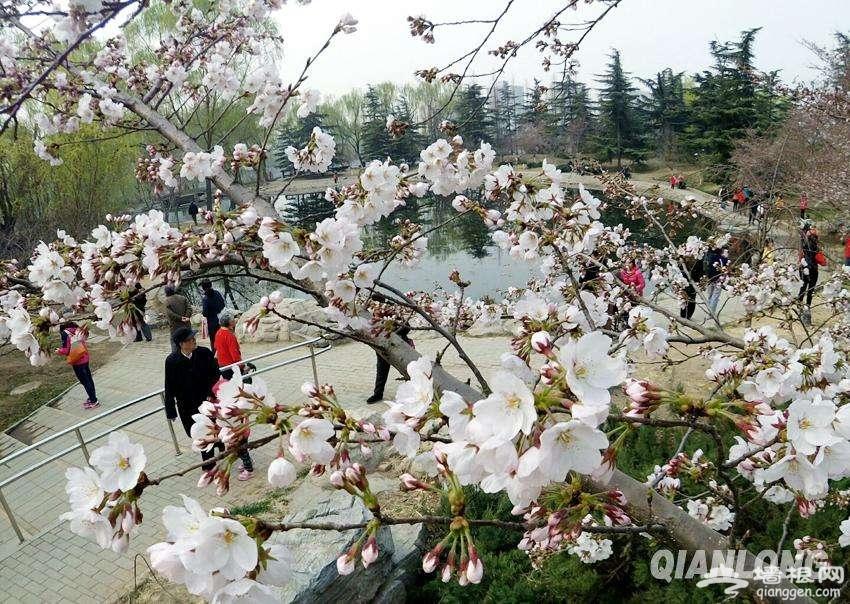 2019年春天北京东城区哪里能赏花?[墙根网]