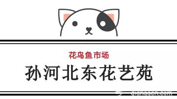 北京花鸟鱼虫市场  人少好玩还免费!