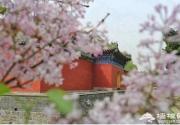 京郊赏杏花推荐这几个地方: 漫山杏花绽放 如同花的海洋