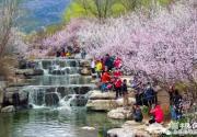 2018北京植物园第30届北京桃花节开幕