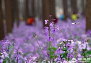 北京将府公园四期对市民开放 形成141万平方米绿色生态屏障