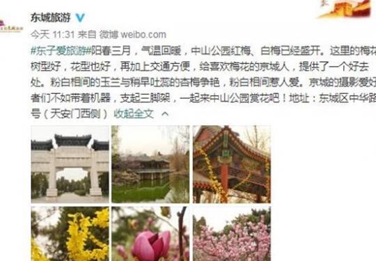 中山公园红梅、白梅已经盛开