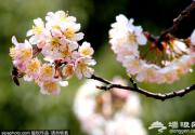 """清明小长假""""驾到"""" 京城赏花游园文化节"""
