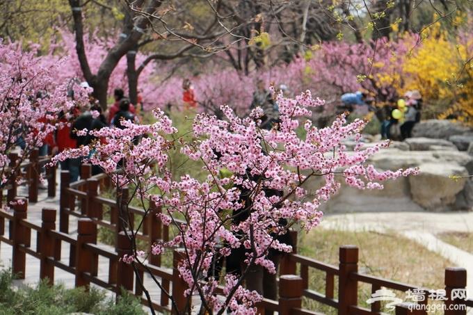 北京春游去哪玩?市属公园清明假期举行30项游园活动[墙根网]