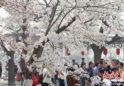 北京春游去哪玩?市屬公園清明假期舉行30項游園活動