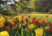春游古村 赏花看展 去京城最小众的地方,赏最美的春天!