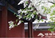 """戒台寺""""第二十二届丁香旅游文化节""""将开幕"""