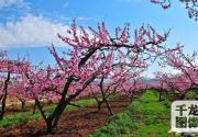 又到赏花季 你知道北京有哪些花海么?