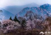 """京城近郊这个""""秘密花园""""里桃花开成海 许你三生三世的浪漫"""