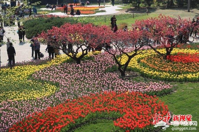 北京植物园40万郁金香盛放 展区设计灵感来自绘本《秘密花园》[墙根网]