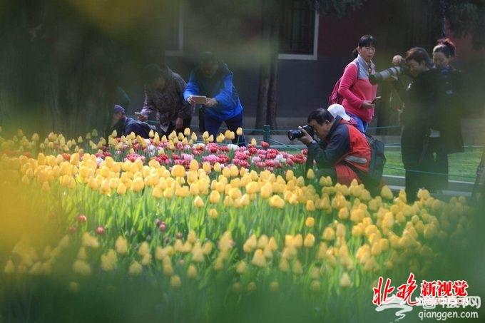 北京中山公园郁金香洋水仙等进入最佳观赏期 设计7个主题景区[墙根网]